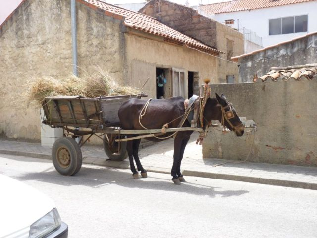 Burro and cart in Portugal